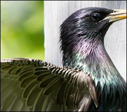 bird control Highland Village